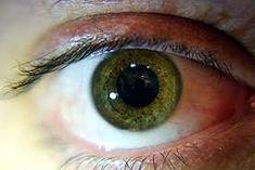 Kết quả hình ảnh cho eyes colors