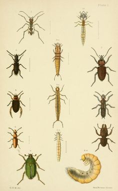 An elementary manual of New Zealand entomology; - Biodiversity Heritage Library. Plate I