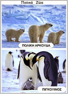 Polar Animals, Polar Bear, Polo Norte, Winter Activities For Kids, Greek Language, In Kindergarten, Winter Christmas, Crafts, Macrame