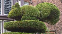 Squirrel topiary in the garden at Rufford Old Hall © National Trust / Rufford Old Hall