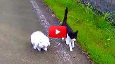 Listen To These Maine Coon Cats Chirp Back At The Birds! | The Animal Rescue Site Blog