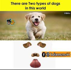 Crazy Meme, Types Of Dogs, Labrador Retriever, Funny Memes, Animals, Labrador Retrievers, Animales, Dog Types, Animaux