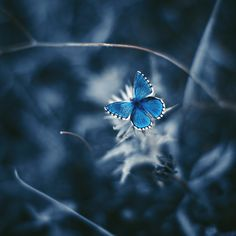 Luis Mariano, Celestial, Instagram, Macros, Colors, Highlight, Addiction, Spirit, Butterfly