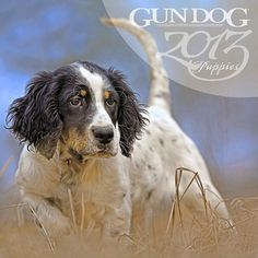 Gun Dog Puppy Wall Calendar: What's cuter than a frolicking puppy? And with so many great breeds, don't you want to own one of every kind? Now you can, with the 2013 Gun Dog Puppy Calendar!  $12.95  http://calendars.com/Assorted-Dogs/Gun-Dog-Puppy-2013-Wall-Calendar/prod201300001077/?categoryId=cat00188=cat00188#