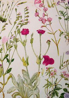 Vintage Botanical Prints Flowers | Flickr: partage de photos!