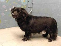 Check out Jackson's profile on AllPaws.com and help him get adopted! Jackson is an adorable Dog that needs a new home. https://www.allpaws.com/adopt-a-dog/flat-coated-retriever/6102634?social_ref=pinterest