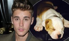 He could be a loser. Justin Bieber is reported to have 'abandoned' his third pet, an adorable puppy called Karma.