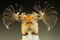 An extreme close-up of the head of a fly larvae