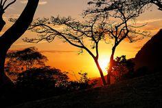 O sol nascendo por trás das árvores da floresta tropical... Rio de janeiro, Brasil.