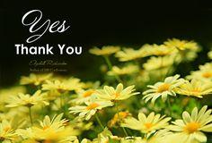 Elizabeth Richardson - Yes Thank You