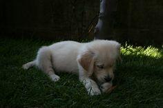 Maggie:....superconcentrata o assonnata?!?!