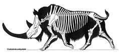 Coelodonta_minmi-design | Flickr - Photo Sharing! Prehistoric World, Prehistoric Creatures, Skeleton Anatomy, Skeleton Drawings, Animal Skeletons, Animal Bones, Dinosaur Art, Extinct Animals, Fauna