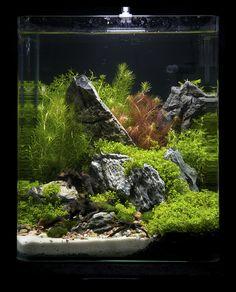 Nano contestants at the Art of the Planted Aquarium, Hannover 2011 Betta Aquarium, Aquarium Terrarium, Betta Fish Tank, Saltwater Aquarium, Planted Aquarium, Freshwater Aquarium, Aquascaping, Aquarium Landscape, Nature Aquarium