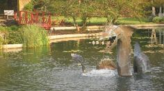 New Hanover County Arboretum- In Wilmington, NC