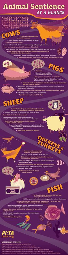 Did you know that chickens are the closest living relatives of the Tyrannosaurus rex? Learn more fascinating facts about some of your favorite animals!