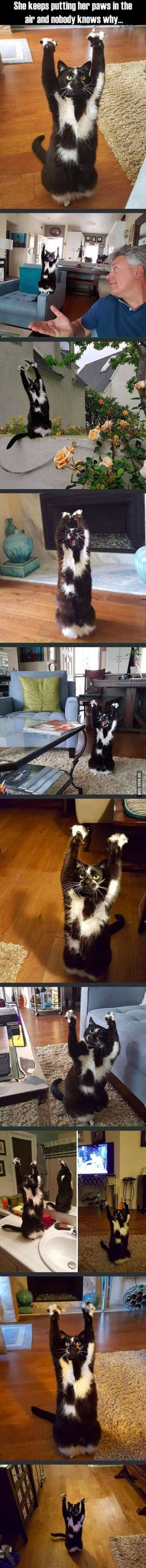 Haha, we can only begin to guess #funny #pet