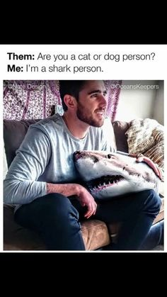 This describes me! << I like catperson plus shark person All Sharks, Save The Sharks, Shark Pictures, Funny Pictures, Animal Memes, Funny Animals, Shark Facts, Funny Memes, Hilarious