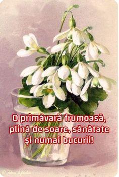 Beautiful Flowers Pictures, Flower Pictures, 8 Martie, Flower Arrangements, Happy Birthday, Merry, Spring, Plants, Emoticon