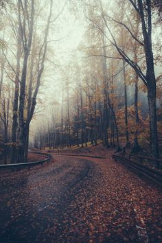 elenamorelli: { light and mist and dead leaves }
