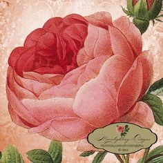 ROSES PINK Pierre-Joseph Redoute VINTAGE Flower Garden Art- Printable Download Collage Paper Crafts Card Decoupage No. 15