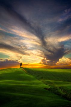 Cypress Tree at sunset in Tuscany