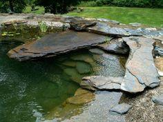 Natural Swimming Pools : Photo