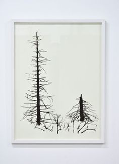Spruces 2