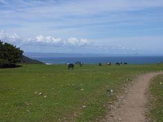 Cerros en Iloca, Chile.