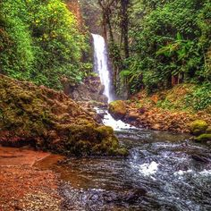 A little #oasis in the clouds!  The La Paz #Waterfall Gardens in the cloud forest outside San Jose via @yeimelycr! #costarica #vacations #crexperts