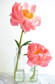 Heart of Gold and Luxury: Petal by Petal: Coral Supreme Peony
