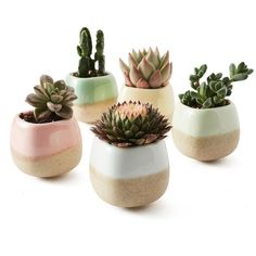 How to Make Beautiful Succulent Wedding Favors (Easy DIY!)