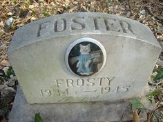 """Frosty Foster, or, """"Cat in a Dress"""" by Scaramouche!, via Flickr"""