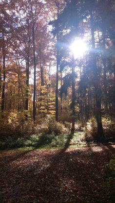 Aalen - Germany. Autumn