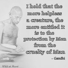 580746_141077459365030_1607269648_n by momiecat, via Flickr  - Gandhi - a great man advocating for kindness to all animals.