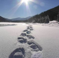 Hike in the winter with snowshoes - no bugs!