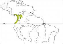 Fulvous-vented Euphonia (Euphonia fulvicrissa)