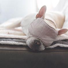 'precious sleep', Enzo, the French Bulldog, #enzoandlina on instagram.