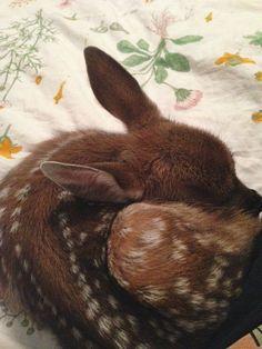 Wuzireh – cute – – Eszter B_R - Baby Animals Cute Creatures, Beautiful Creatures, Animals Beautiful, Doja Cat, Cute Little Animals, Animals And Pets, Fur Babies, Puppies, Illustrations