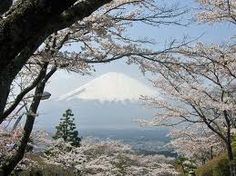 Osaka Japan Cherry Blossom Festival