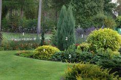 1. verbena bonariensis 4.  Spiraea japonica 'Goldmound'  2.  Juniper rock 'Blue Arrow' 5. Alchemilla mollis 'Auslese' 3.  Derain white  'Aurea'