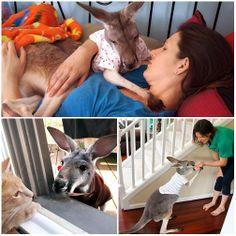 Indissoluble friendship, kangaroo Boomeroo loves cuddling