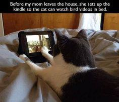Kittie on the Kindle
