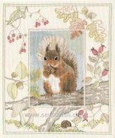 "Gallery.ru / velvetstreak - Альбом ""Wildlife Red Squirrel"""