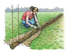 Living Fences: How-To, Advantages and Tips   Sustainable living fences can hold animals, protect soil, provide livestock fodder, offer food or compost, and will last generations.