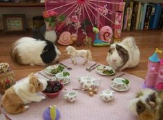 guinea pig tea party...i think i've now seen everything!!! :D