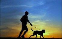 Pies najlepszym przyjacielem człowieka