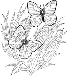 Coloriage de papillon 1139