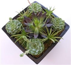 "Contemporary Planter with Succulents - black (9"" square)"