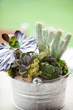 rustic succulent centerpiece    {Rosehip Flora}
