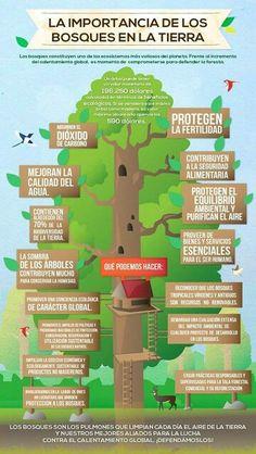 La importància dels arbres!